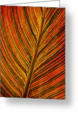 Leaf Pattern Abstract Greeting Card