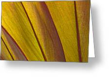 Leaf Patterns Greeting Card
