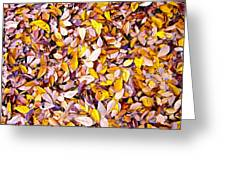 Leaf Pile Greeting Card