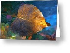 Leaf Portrait 5 Greeting Card