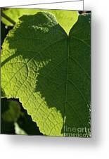 Leaf Shadow Greeting Card