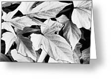 Leaf Study In Black And White Greeting Card