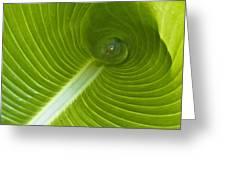 Leaf Tube Greeting Card