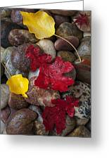 Leafs And Stones Greeting Card