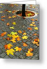 Leafs In Ground Greeting Card