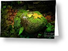 Leafs On Rock Greeting Card