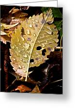 Leafy Tears Greeting Card