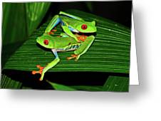 Leap Frog Greeting Card