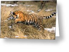 Leaping Siberian Tiger Greeting Card