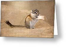 Least Chipmunk Greeting Card