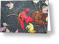 Leave The Leaves Greeting Card