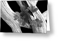 Leaves And Driftwood Bw Greeting Card