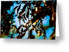 Leaves And Sky Greeting Card