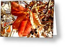 Leaves And Small Berries  Greeting Card