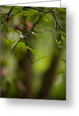 Leaves And Thorns Greeting Card