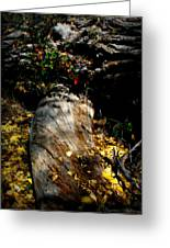 Leaves Around The Tree Trunks Greeting Card
