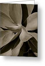 Leaves II - Mono Greeting Card