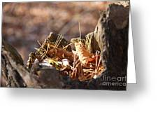 Leaves In Stump Greeting Card