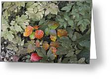 Leaves Of Three   Let It Be Greeting Card