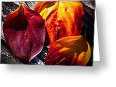 Leaves On The Deck Greeting Card