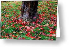 Leaves On The Ground Greeting Card