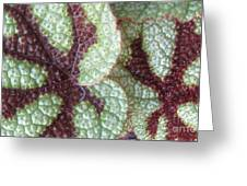 Leaves With Beautiful Texture Greeting Card