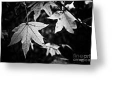 Leaves Without Color Greeting Card