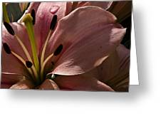 Leftover Lily Greeting Card