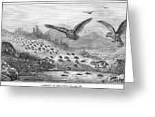 Lemming Migration Greeting Card