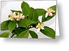 Lemon Blossom Greeting Card