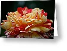 Lemon Cherry Chip  Greeting Card