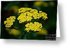 Lemon Lace Greeting Card
