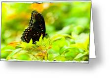 Lemon Lime Butterfly Greeting Card