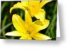 Lemon Peel Yellow Greeting Card