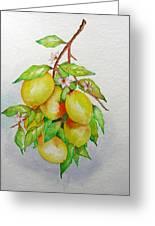 Lemons Greeting Card by Elena Mahoney