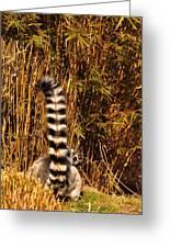Lemur Tail Greeting Card