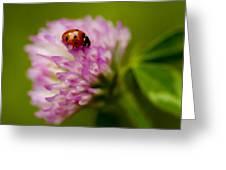 Lensbaby Ladybug On Pink Clover Greeting Card