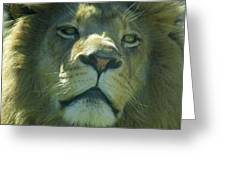 Leo,lion Greeting Card