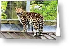 Leopard 3 Greeting Card