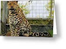 Leopard 4 Greeting Card
