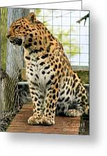 Leopard 5 Greeting Card
