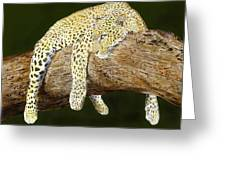 Leopard At Rest Greeting Card by Yvonne Scott