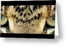 Leopard Eyes Greeting Card by Sumit Mehndiratta