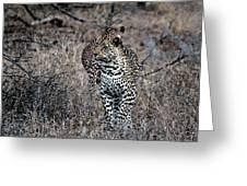 Leopard Hunt Greeting Card