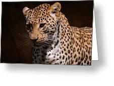 Leopard I Greeting Card
