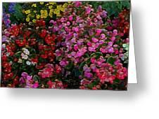 les fleurs II Greeting Card