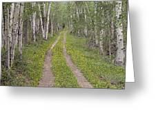 Less Traveled Road Through Aspens Greeting Card