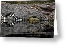 Let Sleeping Crocs Lie Greeting Card