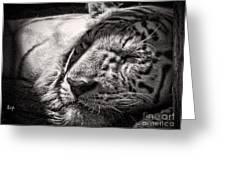 Let Sleeping Tiger Lie Greeting Card