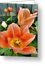 Lets All Dance For The Tulips Are Out Greeting Card